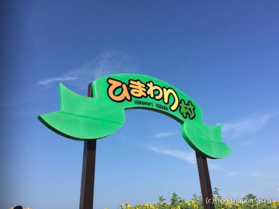 (Seasonal News) 河北潟「ひまわり村」圧巻っ!35万本のひまわりはなんと巨大迷路!しかも難易度高~。迷路を出たらブラウンスイスのソフトクリームを