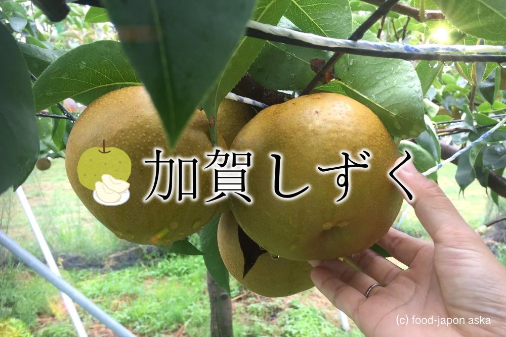 「加賀しずく」石川県が16年かけ開発した大玉の梨人気。3年目に突入!大きいけどきめ細かくてジューシーで甘〜い