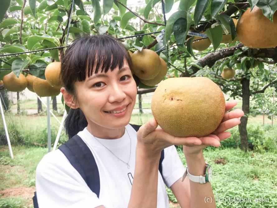 (Seasonal News) 「加賀しずく」デビュー!石川が16年かけ開発した大玉の梨。大きいけどジューシーで甘い!初競りでは1箱6個で10万円の値が付いた。